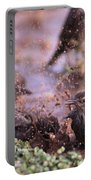 Starlings Fight Portable Battery Charger