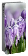 Striped Purple Crocuses In The Snow Portable Battery Charger
