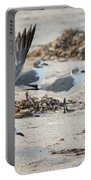 Strutting Seagull On The Beach Portable Battery Charger