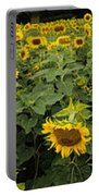 Sunflowers Panorama Portable Battery Charger