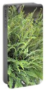 Sunlit Ferns Portable Battery Charger