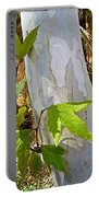 Sunlit Sycamore Leaves In Andreas Canyon In Indian Canyons-ca Portable Battery Charger