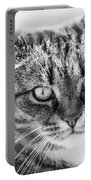 Surprised Cat Portable Battery Charger