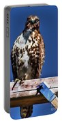 Swainson Hawk Portable Battery Charger