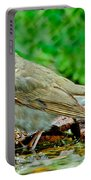 Swainsons Thrush Portable Battery Charger