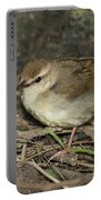 Swainsons Warbler Portable Battery Charger