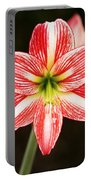 Sweet Lillian Amaryllis Portable Battery Charger