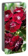 Sweet William Named Sooty Portable Battery Charger