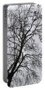 Sweetgum Silhouette On A Rainy Day Portable Battery Charger