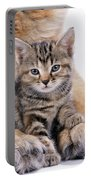 Tabby Kitten Between Large Dogs Paws Portable Battery Charger