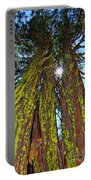 Tahoe Trees - Lake Tahoe By Diana Sainz Portable Battery Charger