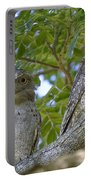 Tawny Frogmouths Portable Battery Charger