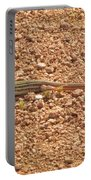 Texas Striped And Spotted Whiptail Lizard Portable Battery Charger