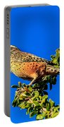 The Cactus Wren Portable Battery Charger