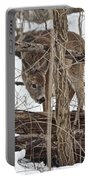 The Doe And The Snow - Odocoileus Virginianus Portable Battery Charger