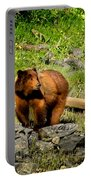 The Grizzly Portable Battery Charger