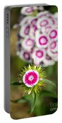 The Star - Beautiful Spring Dianthus Flowers In Bloom. Portable Battery Charger