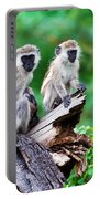 The Vervet Monkey. Lake Manyara. Tanzania. Africa Portable Battery Charger
