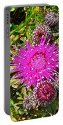 Thistle In Saint Mary's Ecological Reserve-newfoundland Portable Battery Charger