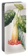 Thorn Apple Flower From Ecuador Datura Rosei Portable Battery Charger