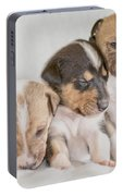 Three Collie Puppies Portable Battery Charger