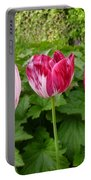 Three Pink Rembrandt Tulips Portable Battery Charger