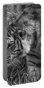 Tiger Stalking In Black And White Portable Battery Charger