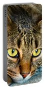 Tiger Time Portable Battery Charger by Art Dingo
