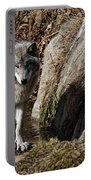 Timber Wolf In Pond Portable Battery Charger