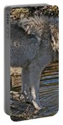 Timber Wolf Pictures 1101 Portable Battery Charger