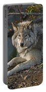 Timber Wolf Pictures 1148 Portable Battery Charger