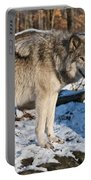 Timber Wolf Pictures 1175 Portable Battery Charger