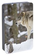 Timber Wolf Pictures 1306 Portable Battery Charger