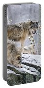 Timber Wolf Pictures 1420 Portable Battery Charger