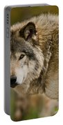 Timber Wolf Pictures 1629 Portable Battery Charger