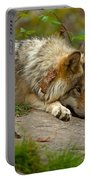 Timber Wolf Pictures 1646 Portable Battery Charger