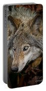 Timber Wolf Pictures 1660 Portable Battery Charger