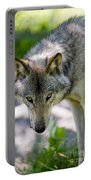 Timber Wolf Pictures 294 Portable Battery Charger