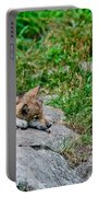 Timber Wolf Pictures 329 Portable Battery Charger