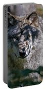 Timber Wolf Pictures 405 Portable Battery Charger