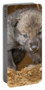 Timber Wolf Pictures 782 Portable Battery Charger