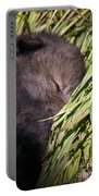Timber Wolf Pictures 820 Portable Battery Charger