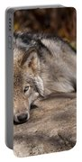Timber Wolf Pictures 945 Portable Battery Charger
