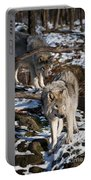 Timber Wolf Pictures 957 Portable Battery Charger by World Wildlife Photography