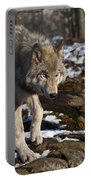 Timber Wolf Pictures 969 Portable Battery Charger