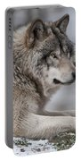Timber Wolf Portrait Portable Battery Charger
