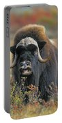 Tk0034, Thomas Kitchin Muskox On Arctic Portable Battery Charger