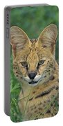 Tk0524, Thomas Kitchin Serval. Huge Portable Battery Charger