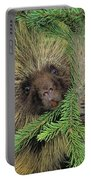 T.kitchin 14107c, Porcupine In Spruce Portable Battery Charger