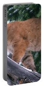 T.kitchin 15274d, Cougar Kitten Portable Battery Charger